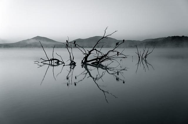 nature-reserve-375609_640.jpg